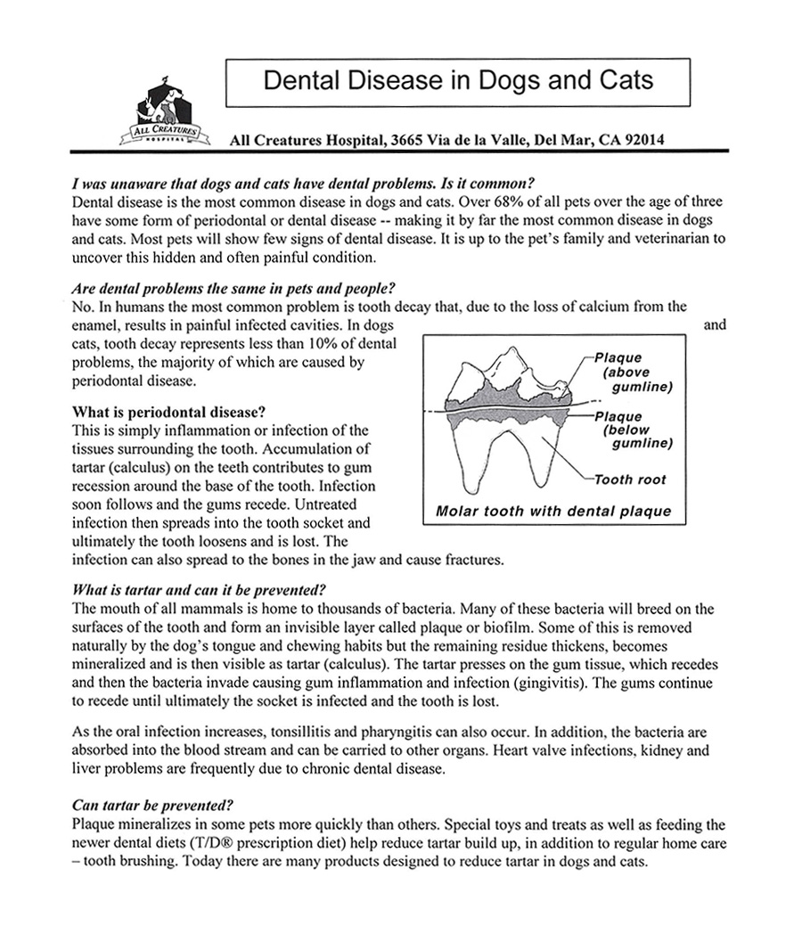 page one of pamphlet explaining dental disease in pets